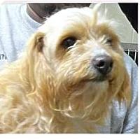 Adopt A Pet :: Nina - Springdale, AR
