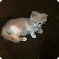 Adopt A Pet :: Warren - Houston, TX