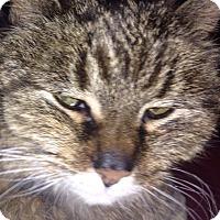 Adopt A Pet :: Mattilda - Pierrefonds, QC