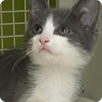 Adopt A Pet :: Winter - San Antonio, TX