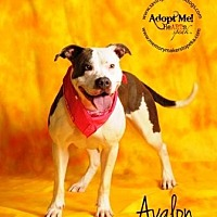 Adopt A Pet :: Avalon - Topeka, KS