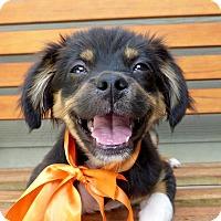 Adopt A Pet :: Pappy - Baton Rouge, LA