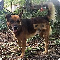 Adopt A Pet :: Brownie - Columbia, SC