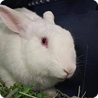 Adopt A Pet :: Mink - Hazlet, NJ