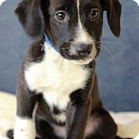Adopt A Pet :: Jacob - Waldorf, MD