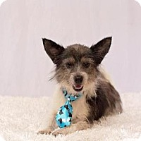 Terrier (Unknown Type, Small) Mix Dog for adoption in New Orleans, Louisiana - Mason