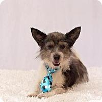 Adopt A Pet :: Mason - New Orleans, LA