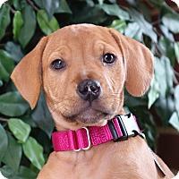 Adopt A Pet :: Gwen - Columbia, IL