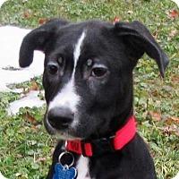 Adopt A Pet :: Frannie - Minneapolis, MN