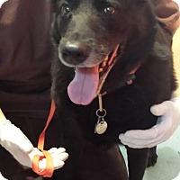 Adopt A Pet :: Luccia - Westminster, CA