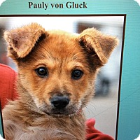 Adopt A Pet :: PAULY VON GLUCK - Los Angeles, CA