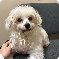 Adopt A Pet :: Donald - Brooklyn, NY