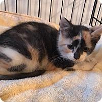 Adopt A Pet :: Raisin - River Edge, NJ