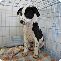 Adopt A Pet :: Otis - Valley Falls, KS