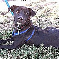Adopt A Pet :: Jetta - Conway, AR