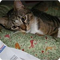 Adopt A Pet :: Antonio - St. Louis, MO