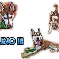 Adopt A Pet :: Juno III - Seminole, FL