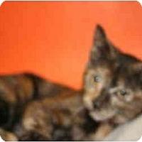 Adopt A Pet :: RACHEL - SILVER SPRING, MD