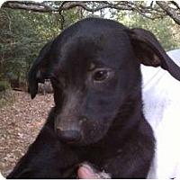 Adopt A Pet :: Becky - Jackson, TN