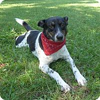 Adopt A Pet :: Jordan - Mocksville, NC