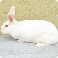Adopt A Pet :: Mac - Bonita, CA