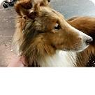 Adopt A Pet :: Prince Albert