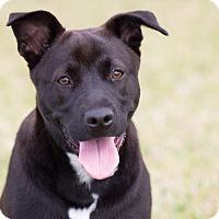 Adopt A Pet :: Annsley - Miami, FL