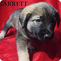 Adopt A Pet :: Garrett - Batesville, AR