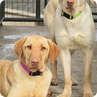 Adopt A Pet :: LYLA & MILLIE(ABANDONED-READ! - Wakefield, RI