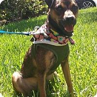 Adopt A Pet :: DUNKIN - Fort Pierce, FL