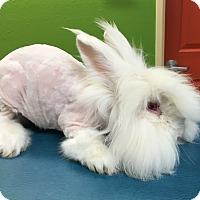 Adopt A Pet :: Wikey - Bonita, CA