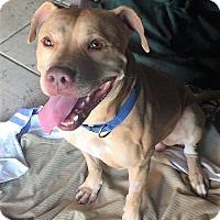 Adopt A Pet :: Stanley - Ft. Lauderdale, FL