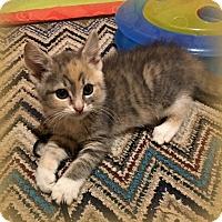 Adopt A Pet :: Missy - Millersville, MD
