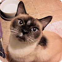 Adopt A Pet :: Baby Walker - Rutherfordton, NC