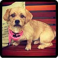 Adopt A Pet :: Honey - Grand Bay, AL
