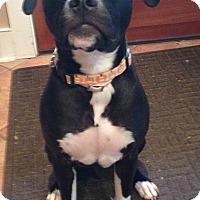 Adopt A Pet :: KINO - Media, PA