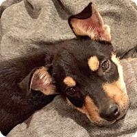 Adopt A Pet :: Arnold - Brownsboro, AL