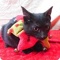 Adopt A Pet :: Diva - Montgomery City, MO