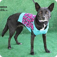 Adopt A Pet :: A088928 - Hanford, CA