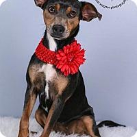 Adopt A Pet :: Tara - Cincinnati, OH