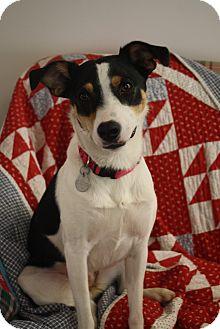 Feist Mix Dog for adoption in Marietta, Georgia - Sophie Lee