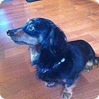 Adopt A Pet :: MAX - Portland, OR