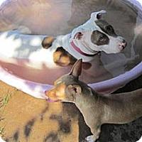 Adopt A Pet :: Nala - Copperas Cove, TX