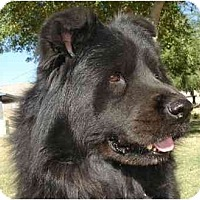 Adopt A Pet :: Chewy - Gilbert, AZ