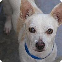 Adopt A Pet :: Archie - Vancouver, BC