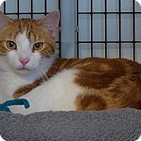Adopt A Pet :: Thumper - Victor, NY