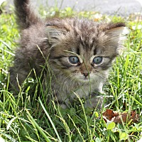 Adopt A Pet :: Luke - Troy, OH