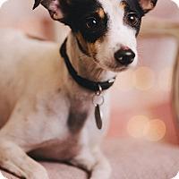 Adopt A Pet :: Buster Keaton - Portland, OR