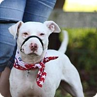 Adopt A Pet :: Brody - Leesburg, FL