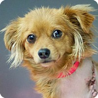 Adopt A Pet :: Tripod URGENT @shelter - Los Angeles, CA